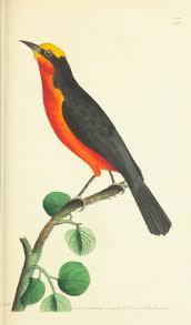 bird figures 1135 best antique birds 1 images on pinterest bird prints