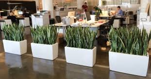 plants for office office decoration with plants give your place an environment