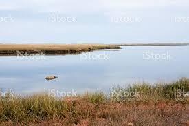 Nauset Marsh Cape Cod - nauset marsh stock photo 133958221 istock