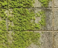 Moss Cleaner For Patios How To Remove Moss From Patio Pavers And Other Hardscaping