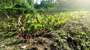 self sustaining garden self sustaining vegetable garden how you can do it too steemit