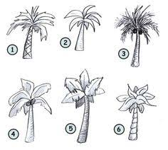how to draw palm trees step 3 drawing pinterest palm