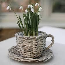 tea cup flower pot 25 nice decorating with willow teacup planter