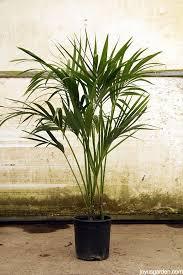good houseplants for low light 10 easy care houseplants for low light