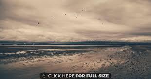 beach birds brown calm clouds pink sand sea wallpaper