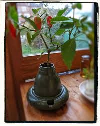 secret garden club hydroponics growing without soil
