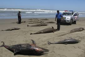 Extinction d'espèces Images?q=tbn:ANd9GcSTaeJnjd3uQxUPwrlsXRjG-XYvLXpvi6_7TMr8wEcoKVewGxz_rA
