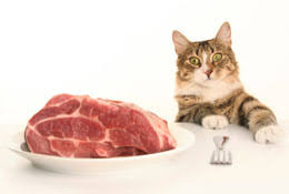 food diet for cats
