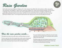native plants for rain gardens clayton rabun county watershed project chattooga conservancy