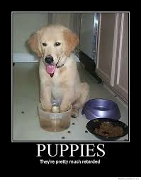 Puppy Memes - puppies they re pretty much retarded weknowmemes
