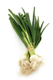 oignon blanc cuisine oignon nouveau légumes