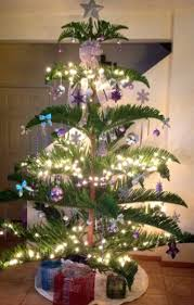 christmas tree pic christmas in hawaii at helemano farms oahu farm that grows