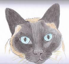 imagenes a lapiz de gatos caricatu gato a lapiz