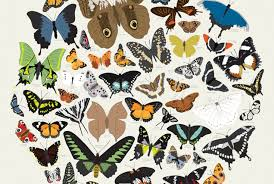 pop chart lab creates breathtaking kaleidoscope of butterflies