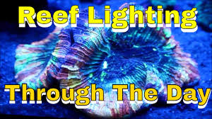 reef tank lighting schedule reef lighting led lights through the day and night youtube