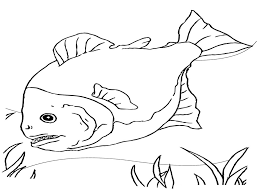 free printable fish coloring pages for kids with of glum me