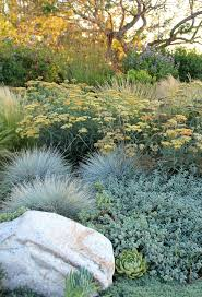 blue oat grass vogue los angeles contemporary landscape decorating