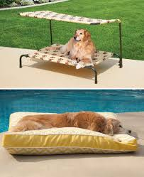 how to keep your pets safe outside improvements blog