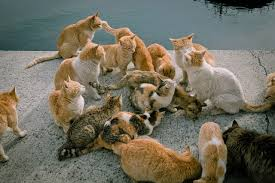cat island cat islands in japan onsentipster blog