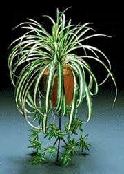 Easy Care Indoor Plants Pernell Gerver U0027s Weekly Columns