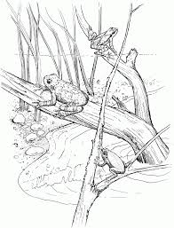 coloring pages alluring swamp coloring pages frog 40 swamp