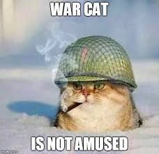 War Meme - war cat war cat is not amused image tagged in war cat made w