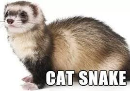 Ferret Meme - nerdarchy hilarious accurately named animals memes