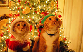 for christmas cats dressed up for christmas wallpaper