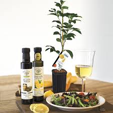 plants wonderful gifts for house plant lovers check out this