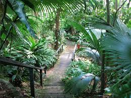 Cairns Botanical Garden by Tropical Landscaping Cairns Botanic Garden Tropical Landscaping