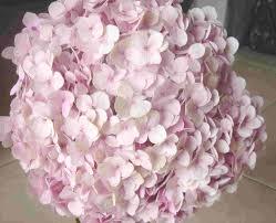 pink hydrangea blush hydrangea pink hydrangea arrangements my style