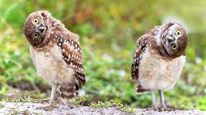 funny owl images reverse search