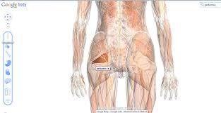 Google Body Anatomy Medical Lessons U2013 Google Body Browser