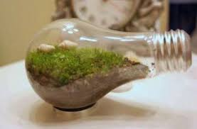 turn a lightbulb into a mini terrarium