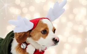 cute dog christmas wallpapers photo collection christmas dogs wallpaper