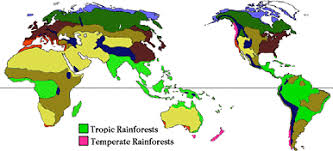 south america map rainforest where are rainforests located