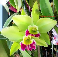 Flower Orchid Best 25 Orchid Flowers Ideas On Pinterest Types Of Orchids