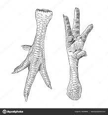 set of chicken feet u2014 stock vector goldenshrimp 142780405