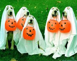 halloween background puppys halloween dog desktop image