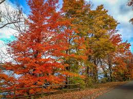 New York State Fall Foliage Map by Upstate Boutique Hotels To Enjoy Fall Foliage Compass Twine