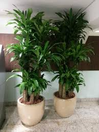 indoor flowering plants glamorous 80 how to care for tropical house plants design