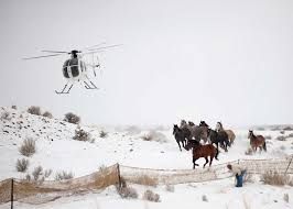 Wild Horses In America Map by Ranchers And Activists Face Off Over Wild Horses News Planetizen