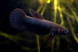 new names for aquarium fish seriously fish