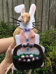 Funny Halloween Costumes Cats 16 Pet Halloween Costumes Images Pet Costumes