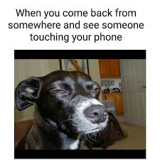 Dog On Phone Meme - no you don t tag friends who do dis sarcasm sarcasmscene dog