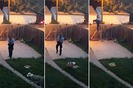 homeowner slams cop for shooting tail wagging dog new york post
