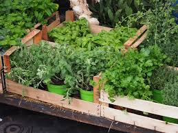 growing herbs 7 of the easiest herbs to grow at home