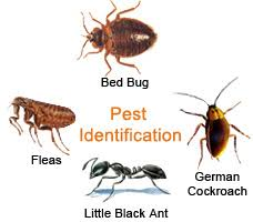 How To Identify Bed Bugs Hire A Bed Bugs Dogs Inspections Company In Nyc Nj U0026 Connecticut