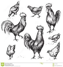 hand drawn roosters and hens stock vector image 67811980
