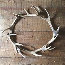 33 best dear deer images on antler deer antlers